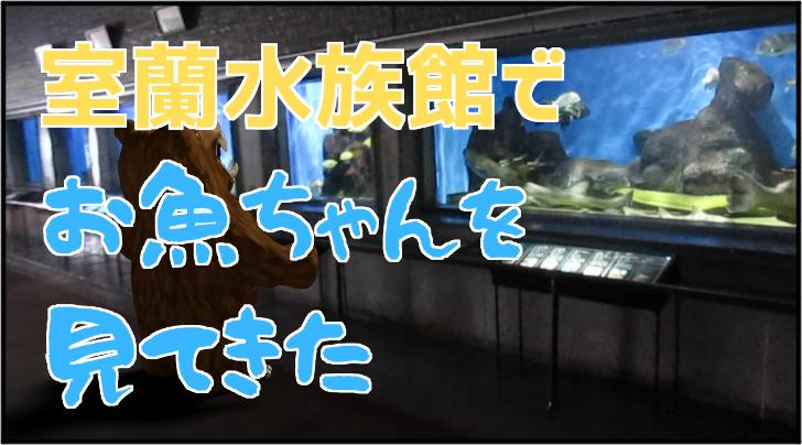 市立室蘭水族館に行って魚を見てきた